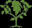 logo zielone eko